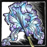 "Reblooming Iris     5""x7"" Hand colored wood block print     $95 Unframed $135 Framed"