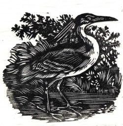 Night Heron after Bewick