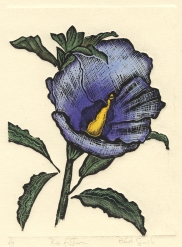 Rose of Sharon-blue shades--Hand colored